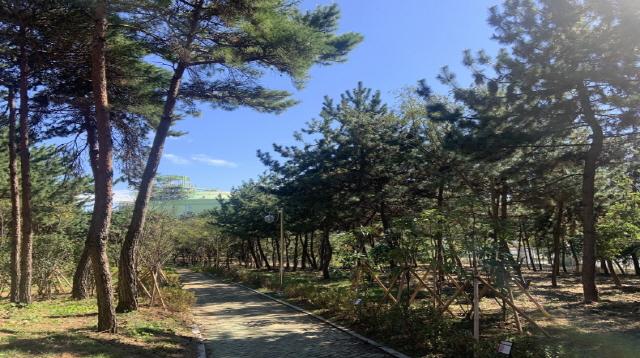 [크기변환]통영시, 2020년 도시숲·녹지공간 조성사업 평가 우수기관 선정-안정근린공원 내 산림조경숲.JPG