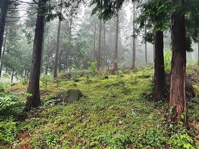 통영시, 2020년도 숲가꾸기사업 최우수기관 선정-도산면 숲가꾸기.jpg