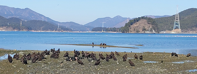 독수리식당 (2).jpg