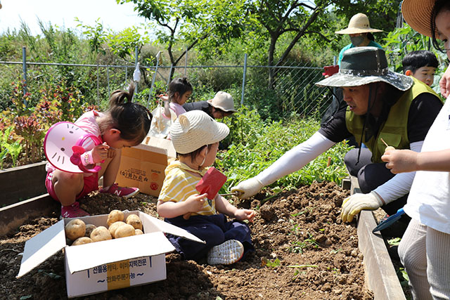 감자수확 체험.JPG